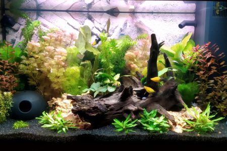 Ons aquarium tot nu toe. Moet nog wat vis bij, maar nu al blij!