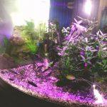 20 vis allemaal kopeltjes behalve algeter