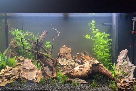 dit is me aquarium na een week de achterste planten heb ik hier al een keer ingekort en de afgeknipte stukjes hergebruikt.