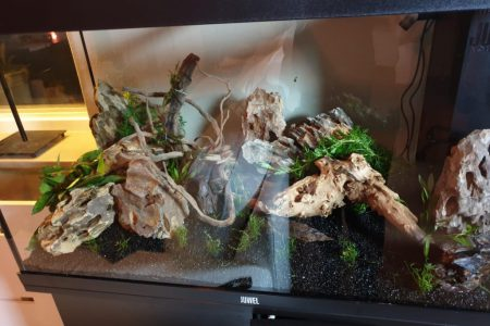 Stap3: de plantjes toegevoegd en mos aan het hout bevestigd zodat hopelijk er een mooi mos laagje over het hout aan de linker kant groeit.