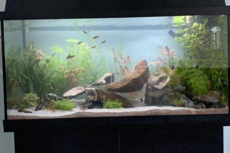 Gezellig beginners aquarium