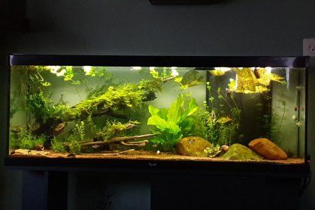 Ik heb geprobeerd een zo natuurlijk mogelijk uitziend decor te realiseren door middel van planten en mossen .