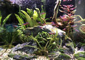 Mooi overzicht van de rotsen, grint, planten en gezellig zwemmende visjes.