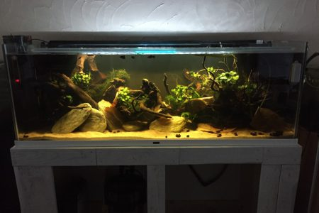 Gedimd licht, 1 LED (Fluval 2.0), Tetra EX 1200 Plus + AquaClear20 HOB (turf granulaat). 2x thermostaat (150W + 300W).