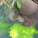 op deze foto zie je wat witte sluier soort alg?? wat kan ik hier aan doen